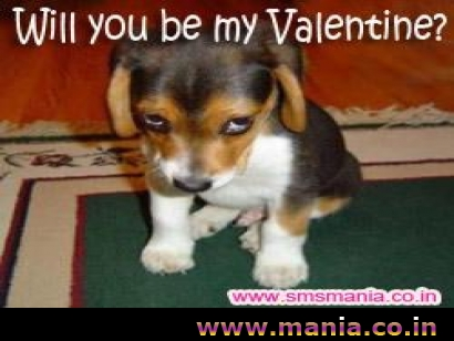 Will you be my valentine - Puppy