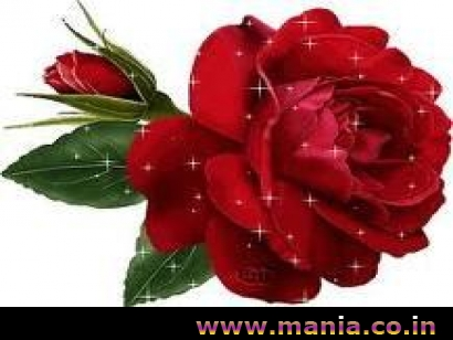 Sparking Rose, Happy Valentine's Day Rose