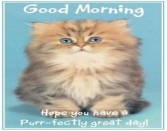 Good Morning Hope You Have A Purr-fectly Great Day