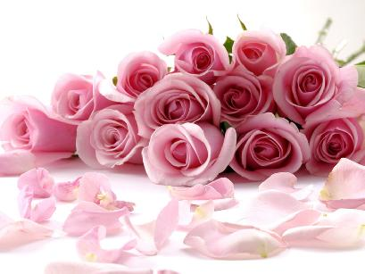 Pink Rose Sign Of Love