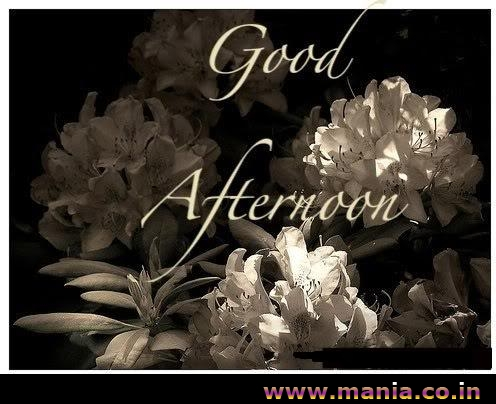 Good Afternoon Scraps Mania Picture Gallery Mania Wallpapers